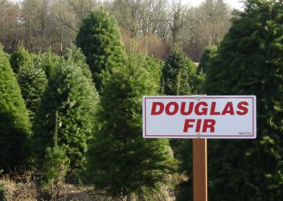 Doug Fir $25.00 - Marquardt Farms
